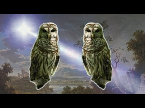 ▶️ OWLS SOUND EFFECT. BARRED OWLS. HOOT OWLS. OWLS WHO NOISES. OWLS HOOT SOUNDS.  12 HOURS. 📢