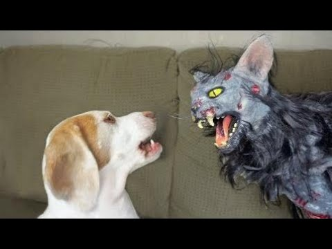 Cute Dog vs. Zombie Cat: Cute Dogs Maymo & Penny | Girl Play Dogs  Part 52