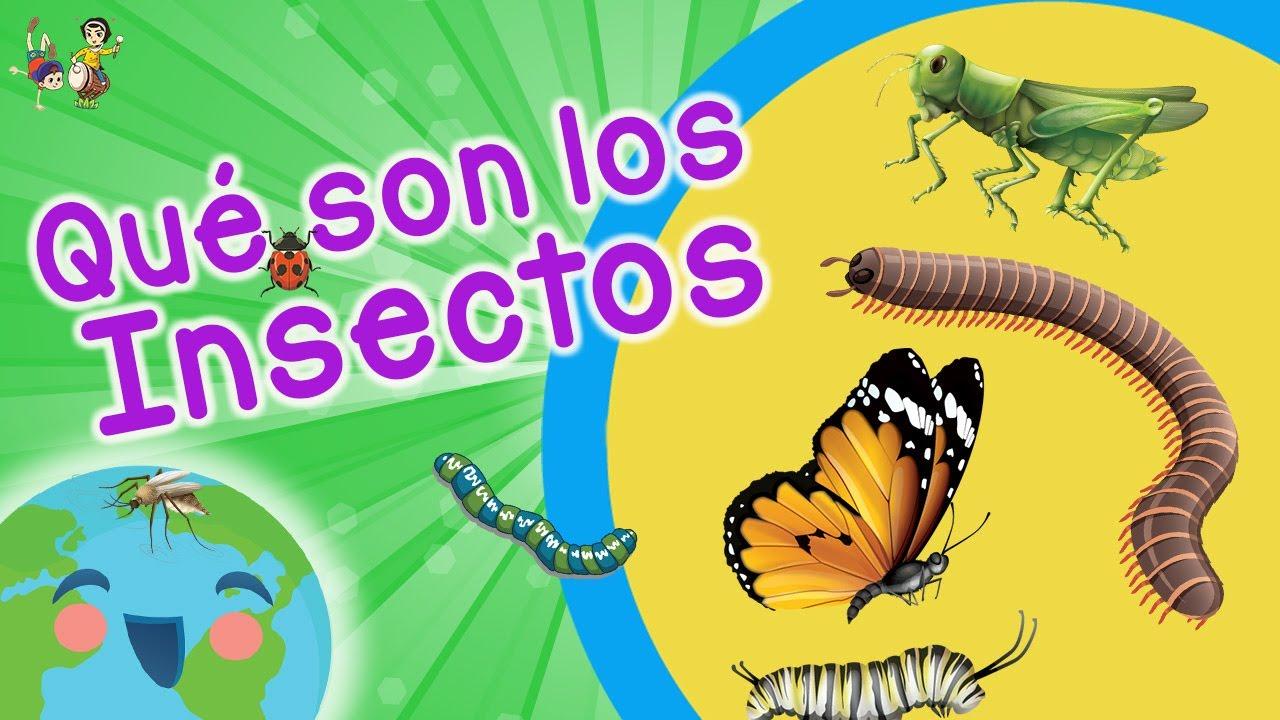 Qué Son Los Insectos Tipos De Insectos Videos Educativos Para Niños