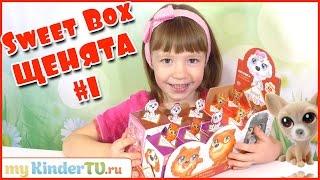 ПУШИСТИКИ (СОБАЧКИ) Sweet Box. #1 Распаковываем собачек Свит Бокс с Ариной
