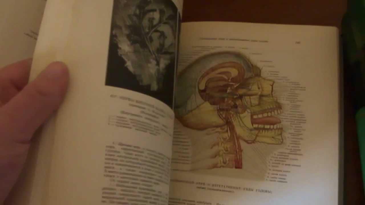 Скачать атлас по анатомии синельников pdf