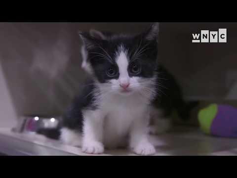Kittens At The ASPCA Kitten Nursery