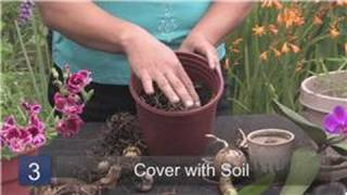 Gardening & Plant Care Tips : How to Plant Bulbs the Correct Way