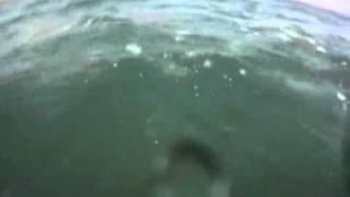 Surfista é cercado por tubarões em praia da Califórnia