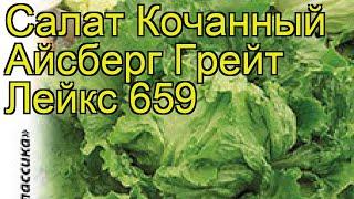 Салат кочанный Айсберг Грейт Лейкс 659. Краткий обзор, описание характеристик lactuca sativa