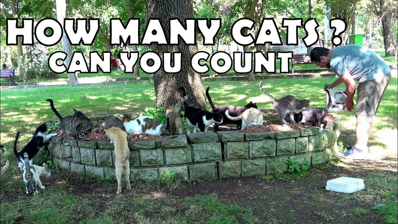 Cats waiting for me every day. For, food and love. Chicken liver feast.