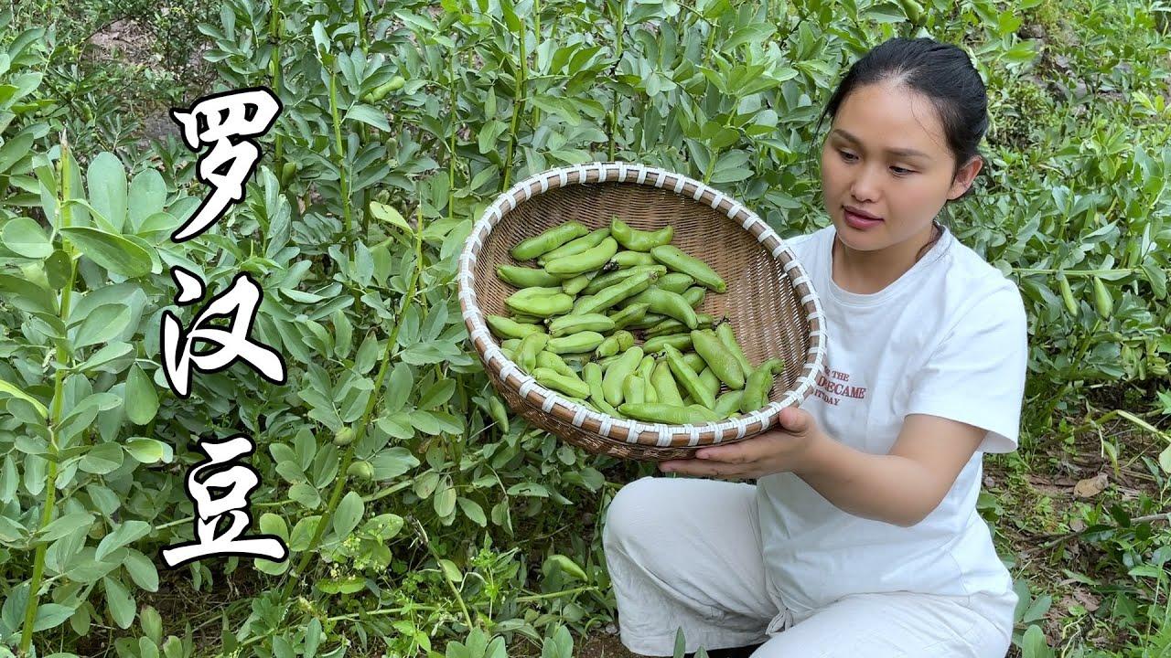 新鲜的罗汉豆,这样简单一做,好吃到爆,全家人都喜欢吃