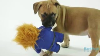 Adorable Puppies Show The Dognald Who's Boss