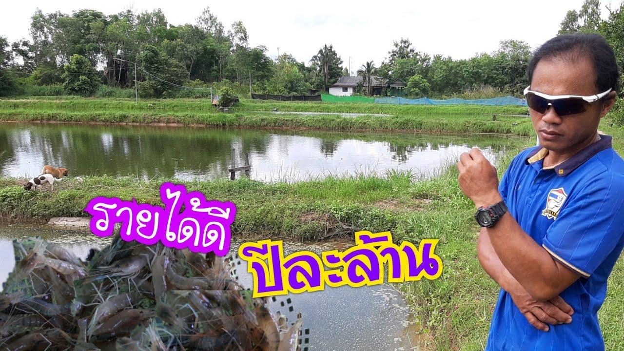 เลี้ยงกุ้งแม่น้ำ1ปี!!มีรายได้เป็นล้าน อ.เดชอุดม จ.อุบลฯ