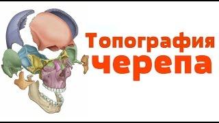 Видео-урок по анатомии. Топография черепа / Топографія черепа