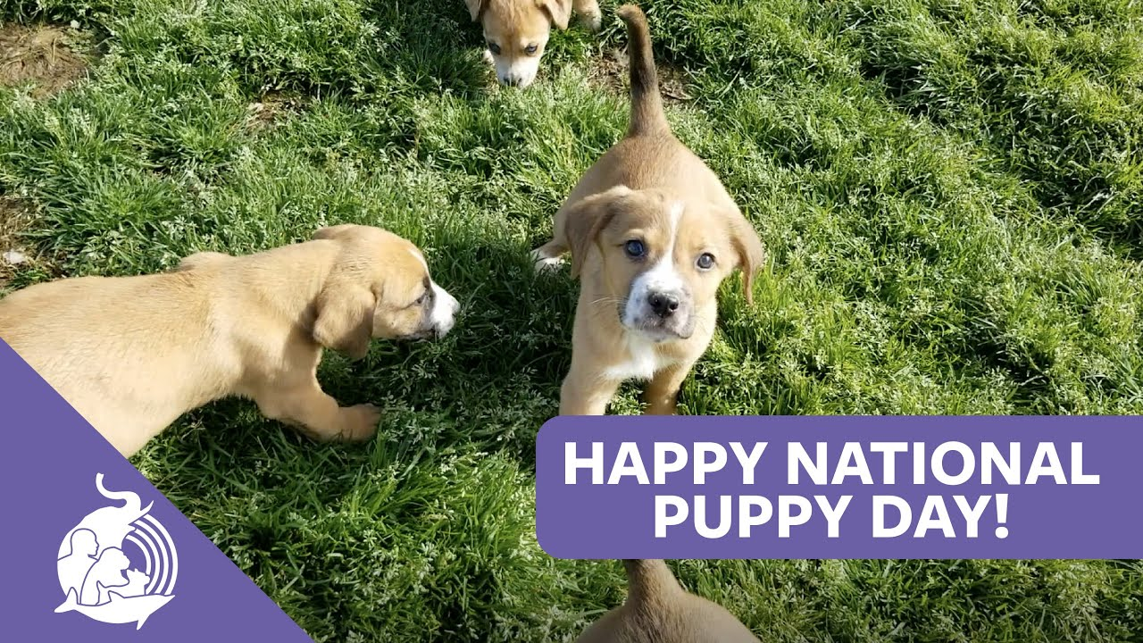 Happy National Puppy Day. Here are the most popular dog breeds ...