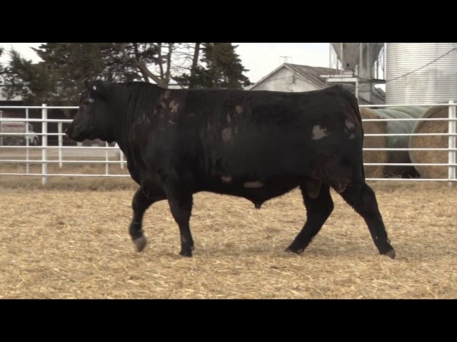 Express Ranches Lot 427
