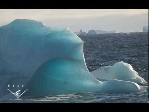 Antarctic icebergs and the carbon cycle
