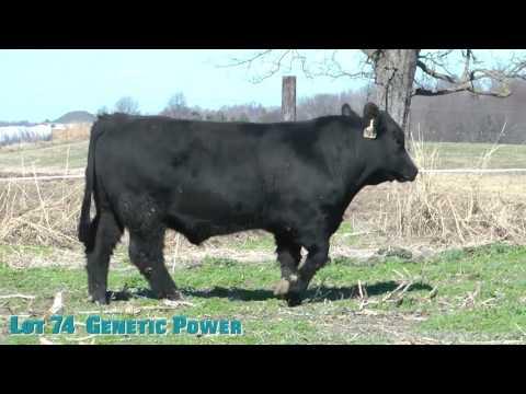 Lot 74  Genetic Power