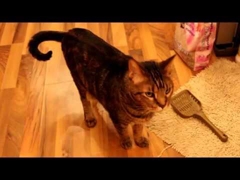 Вопрос: Какой наполнитель туалетный для кошки лучший Почему?