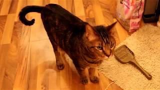 Крутой Лайфхак Как НЕ  МЕНЯТЬ  кошачий туалет МЕСЯЦАМИ.
