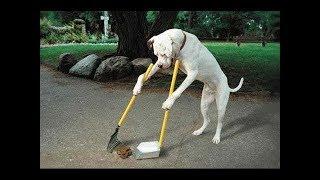 Los 10 Perros Más Inteligentes En El Mundo