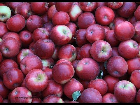 Grow Apples Organically: Everyone Can Grow a Garden 2019 #15