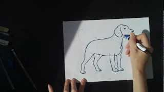 Урок рисования : Собака Бигль! How to draw a dog (beagle).(How to draw a dog (beagle). Как нарисовать собаку бигль за 5 минут. Free Music from: Music4YourVids.co.uk Song: better luck tommorow., 2012-05-29T17:33:31.000Z)