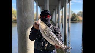 Catch n' Cook California Delta Stripers