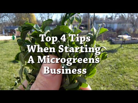 Microgreens Business: My top 4 tips when starting out
