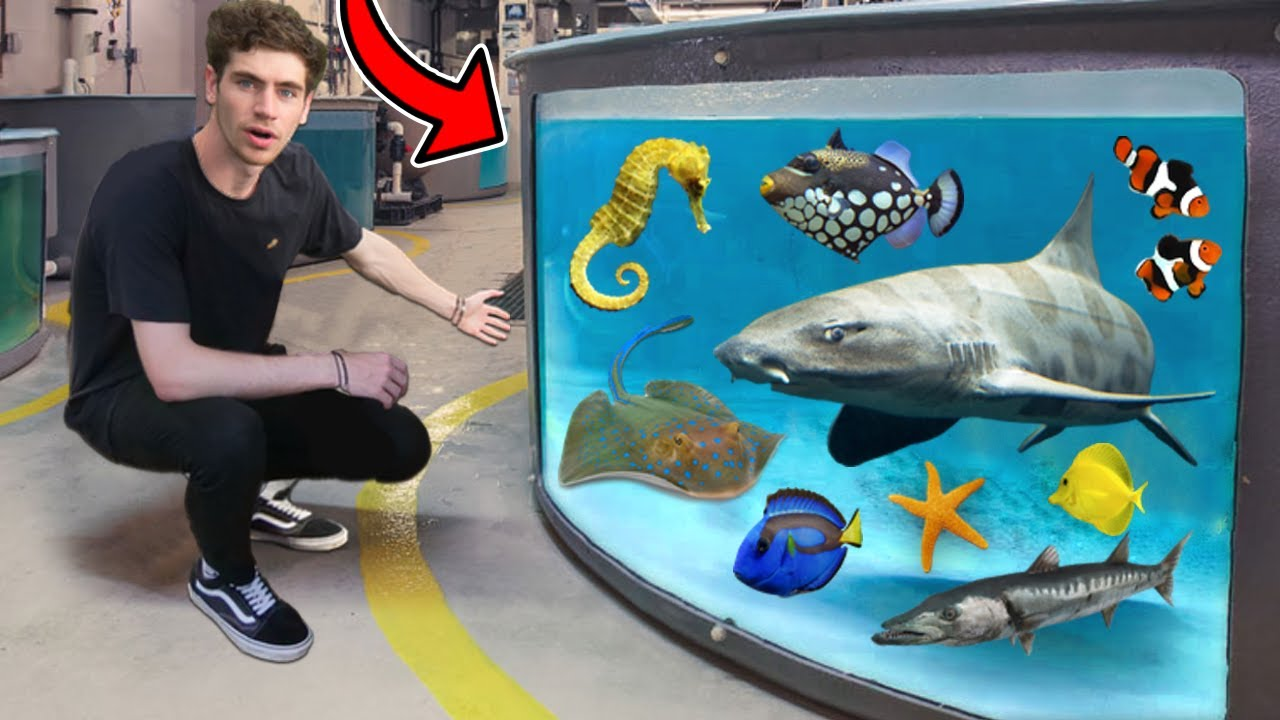 LARGEST AQUARIUM FISH & RARE EXOTIC ANIMAL TOUR!! (800+ Creatures)