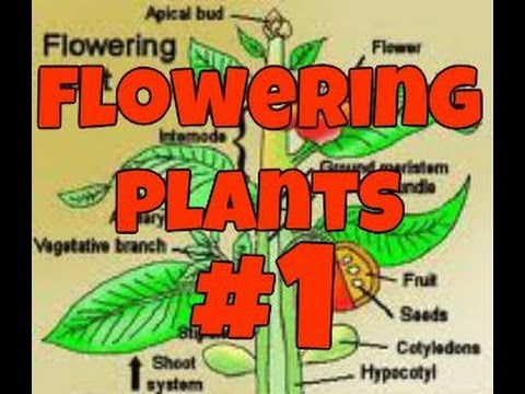 Flowering Plants: Part 1