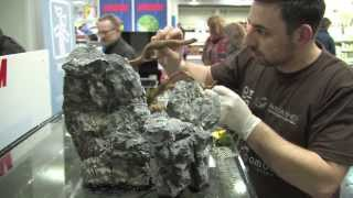 Aquascaping Contest