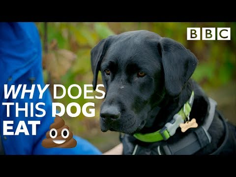 Help! My dog's addicted to poo: Nightmare Pets SOS - BBC