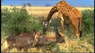 Танзания - Земля диких животных