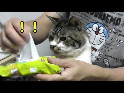 猫の耳掃除☆耳拭きシートを取り出すと飛び出す猫リキちゃん☆ペット用品に入ってるアロマオイルは猫ちゃんには注意です!【リキちゃんねる 猫動画】Cat video キジトラ猫との暮らし
