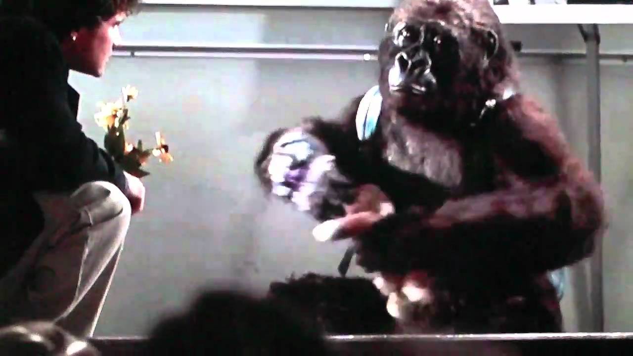 kong king of the apes amy