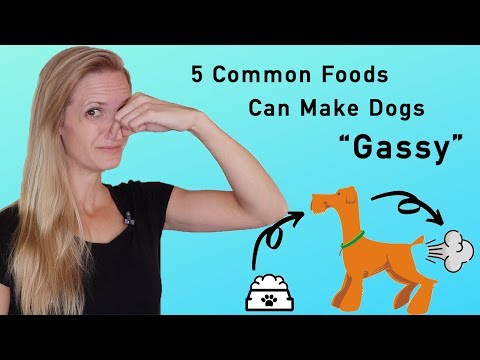"""Sick Of Stinky Dog Farts? These 5 Common Food Types Can Make Dogs """"Gassy"""