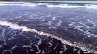 pantai bedul -banyuwangi