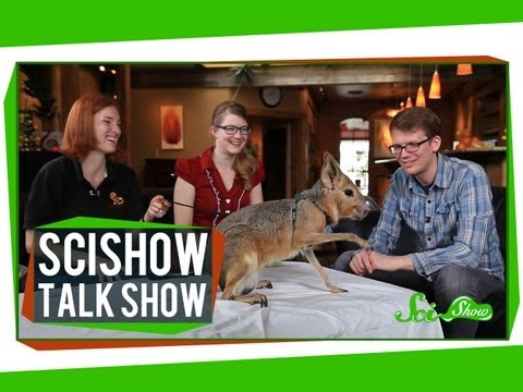 Cute Skulls and Cute Cavies: SciShow Talk Show #17