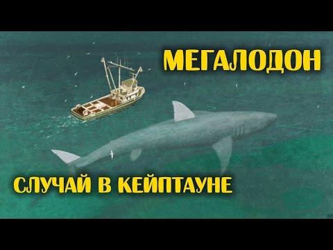 Лучшие фильмы про акул на Вокруг ТВ