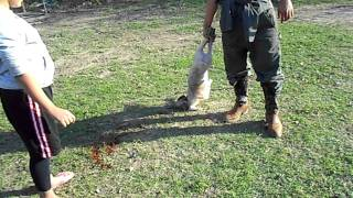 Girl Killing Her First Pig