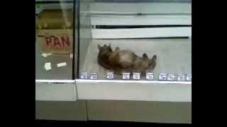Кот в витрине с колбасой