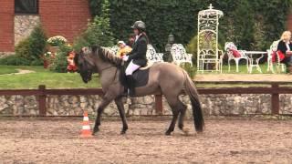 «Вятка Московии - 2013»- Региональная выставка лошадей в ЧКСК  «Лаир» 25