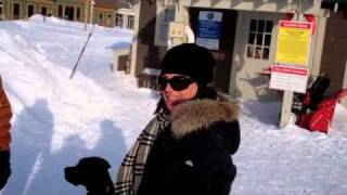 Dogs Go Ice Skating - Yorkie And Cane Corso