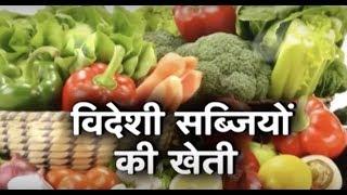 खेत खलिहान - विदेशी सब्ज़ियों की खेती