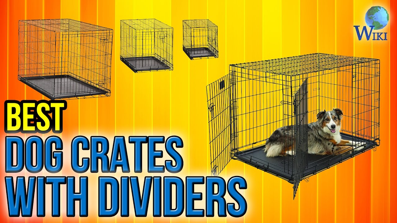 6 Best Dog Crates With Dividers 2017