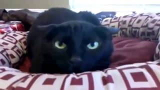 Приколы! подборка СМЕШНОГО видео котов! 20 мин Угара! подборка 2014 Funny Cats Compilation 20 min