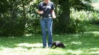 Rottweiler Puppy Training Video By Barb Darbey Mackay Kennels