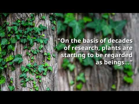 Brilliant Green The Surprising History And Science Of Plant