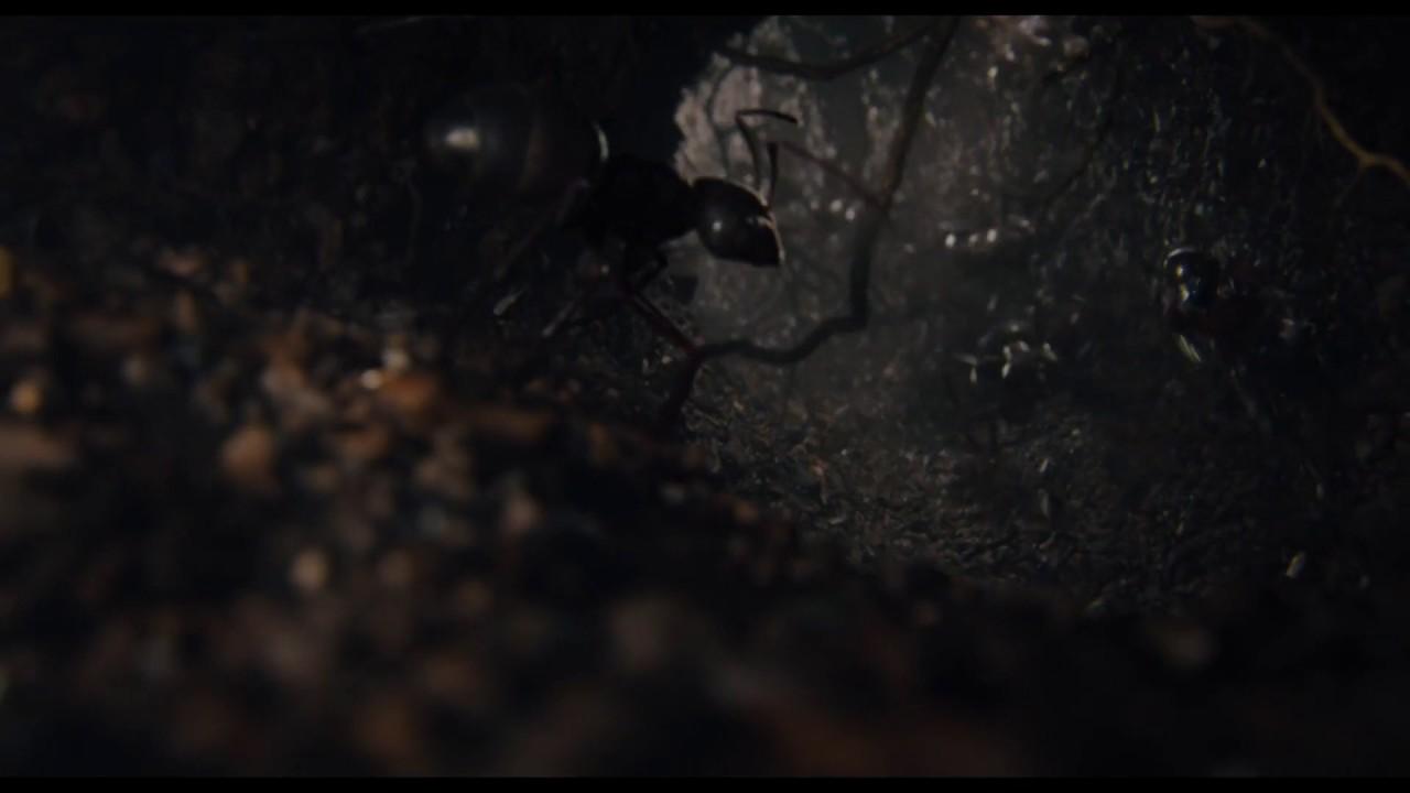 Ant Man - Highest on the Schmidt Pain Index