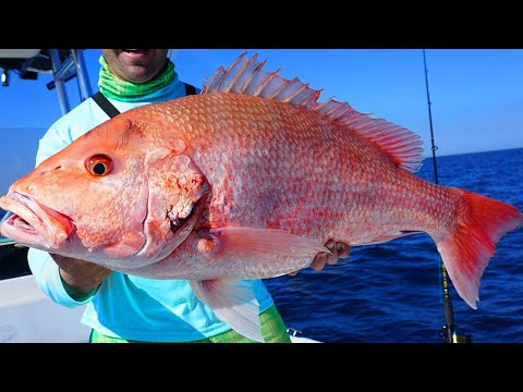 HUGE Red SNAPPER Fishing & How To Catch BlackFin Tuna (Epic Day Gulf Of Mexico Fishing)