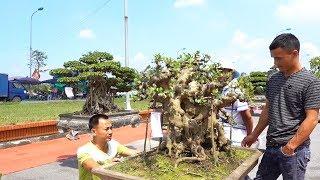 Nhiều người bất ngờ Bonsai để bàn 2 tỷ, tùng kim cương 1,2 tỷ đã có chủ mới - Price of bonsai trees