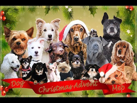 ♥ Christmas Advent / All  i want for christmas is you / DOG MEP ♥
