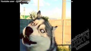 Животные.  Смешные видео.  Сходят с ума.